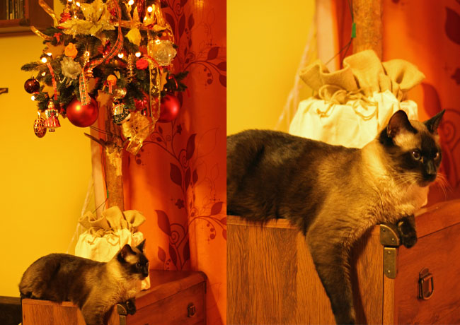 kot przy choince