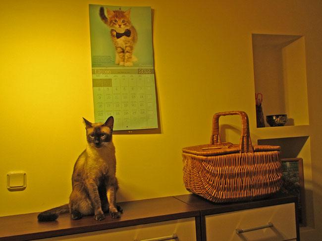 kot na komodzie