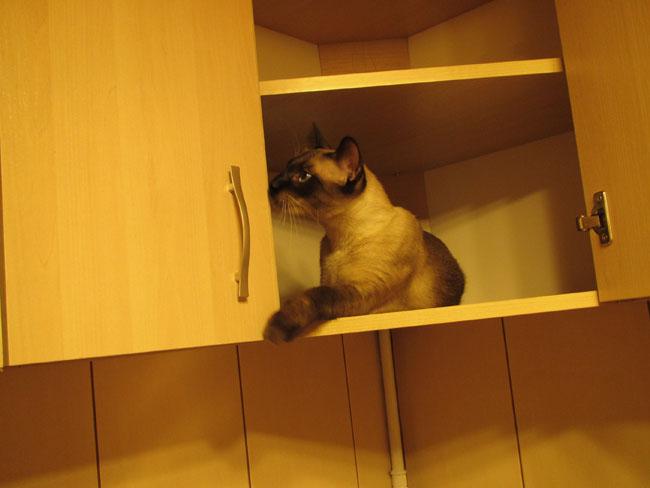 kot w szafce