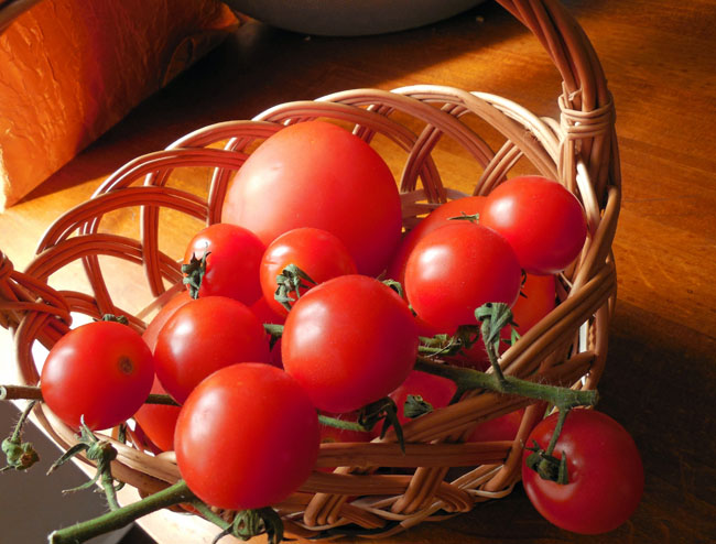 b_pomidory_2016
