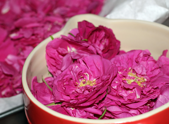 róza na konfitury