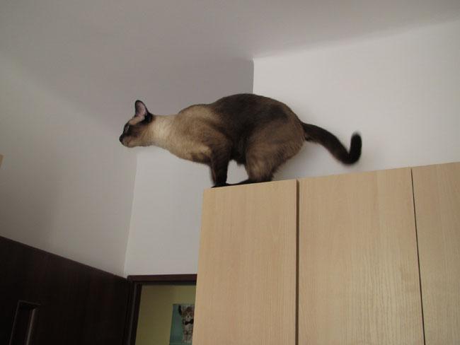 skok na galeryjkę