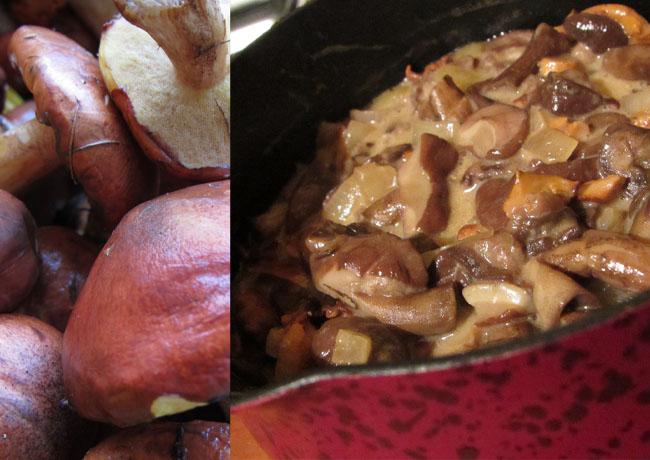 sos z grzybów leśnych