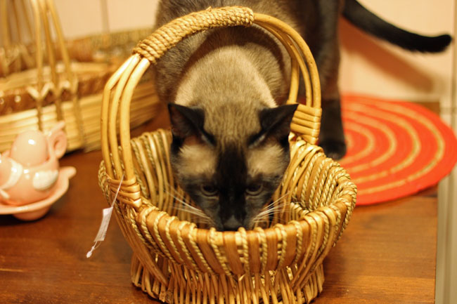 kot i koszyk