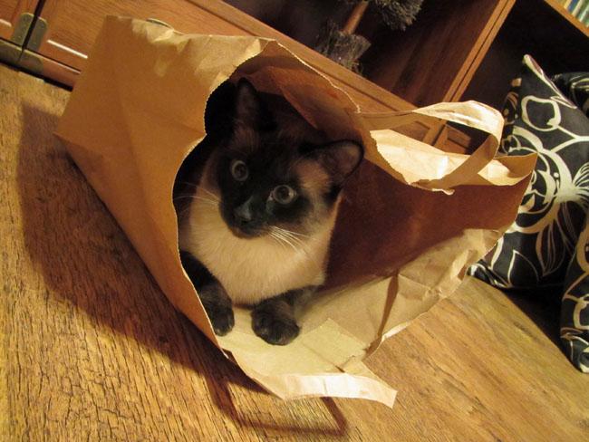 Bajeczka w dniu kota