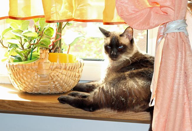 kot w letniej kuchni