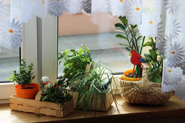 kuchenne_okno