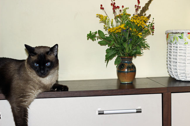 zioła i kot